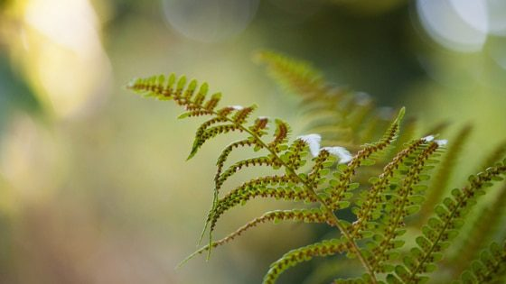 green fern branch | naturopathy tips for health and wellbeing | goodMix