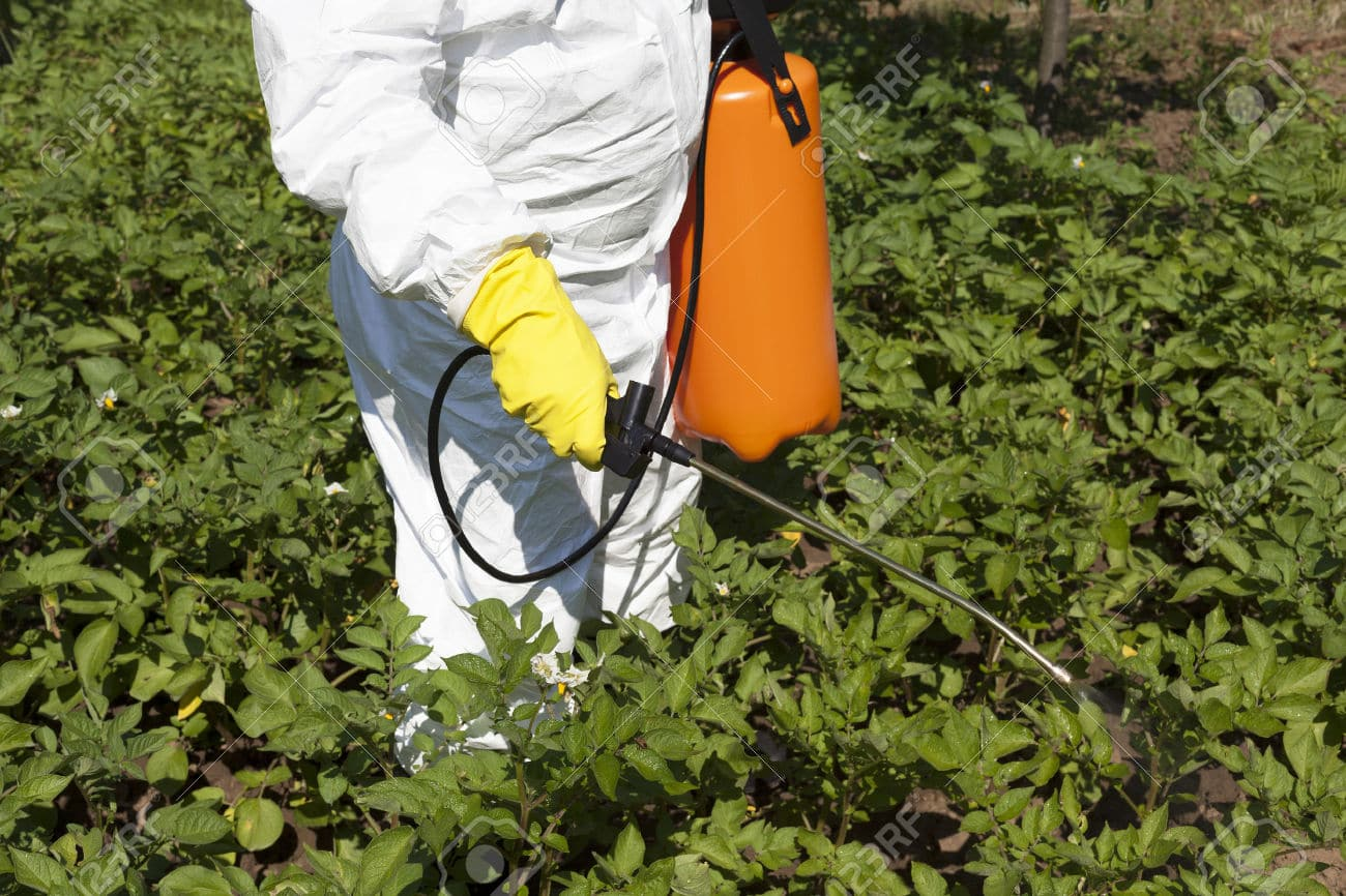 29724610-Vegetables-spraying-with-pesticides-in-a-garden-Stock-Photo